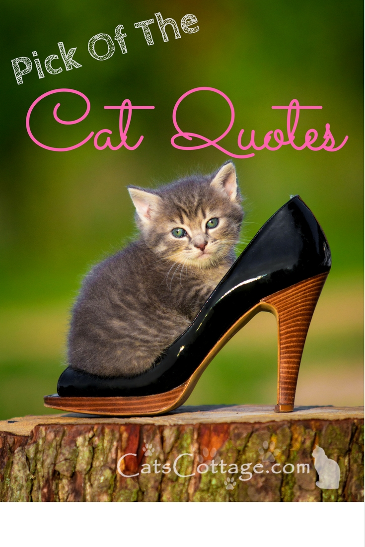 Pick Of The Cat Quotes