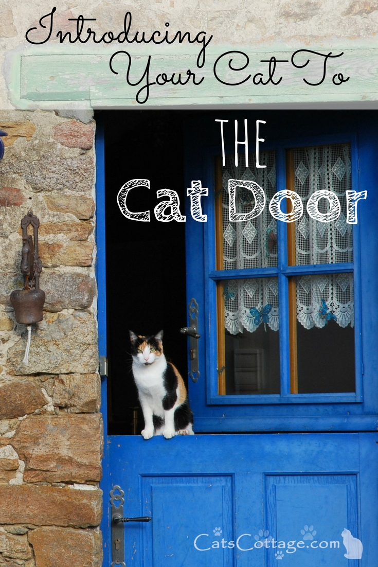 Introducing your cat to the cat door