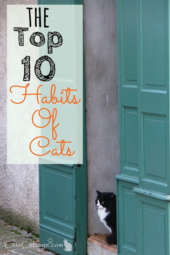 The Top 10 Habits of Cats