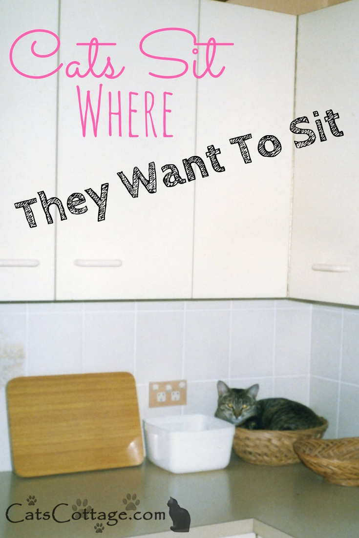 Cats Sit Where They Want To Sit