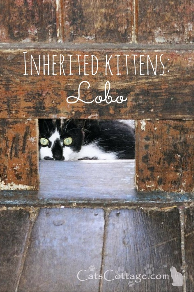 Lay-Low-Lobo-Who-Lives-Under-The-Shed