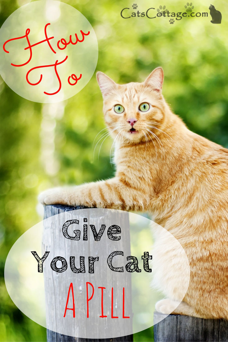 How to give a cat a pill (successfully)