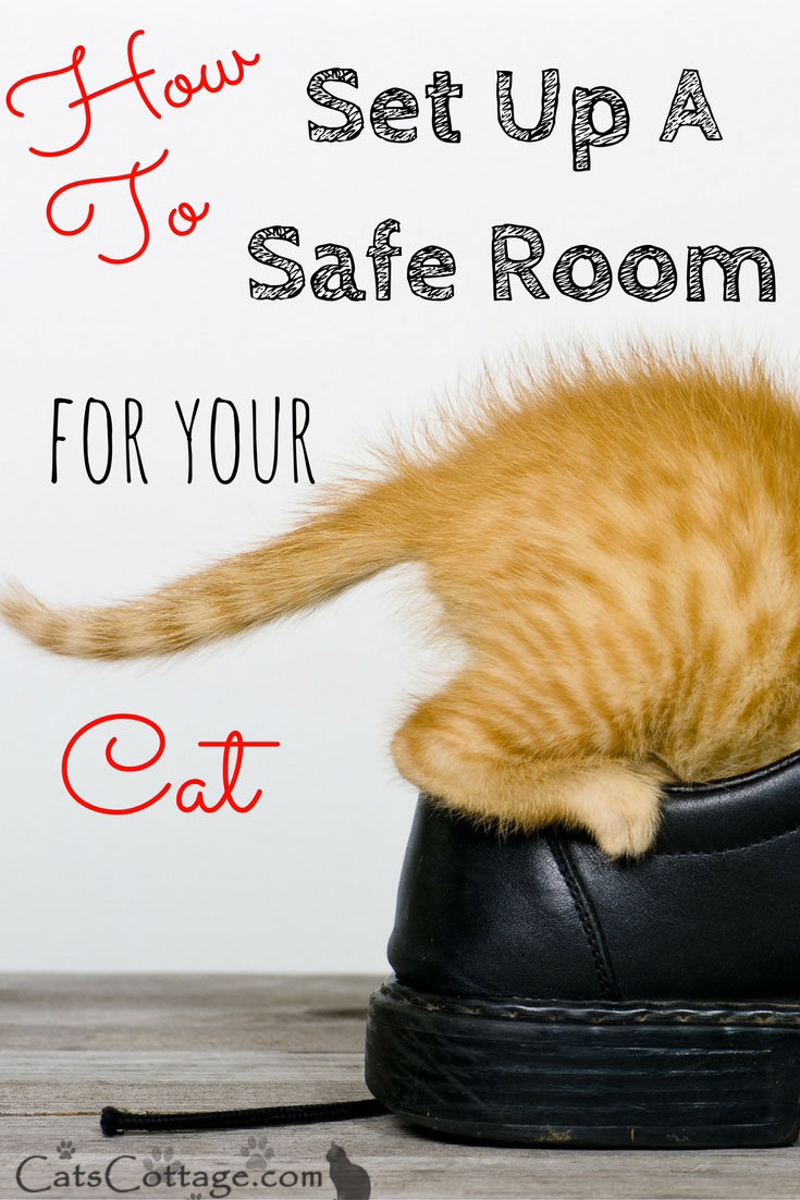 How To Set Up A Safe Room for Your Cat
