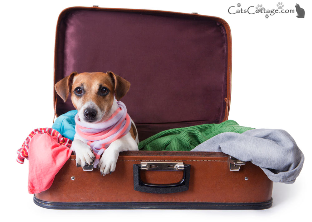 How To Move Overseas With Your Pet