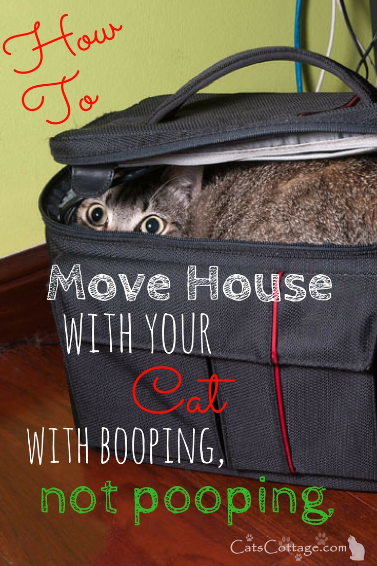 How To Move House With Your Cat (With Booping Not Pooping)