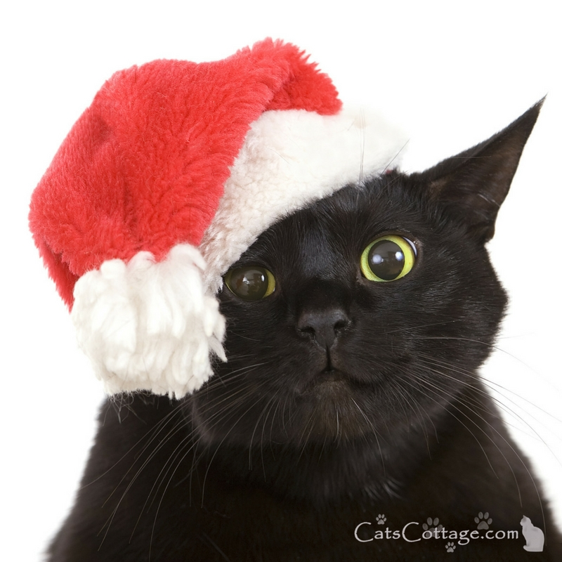 Keep your cat safe at Christmas