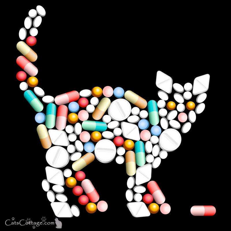 How to give your cat a pill successfully
