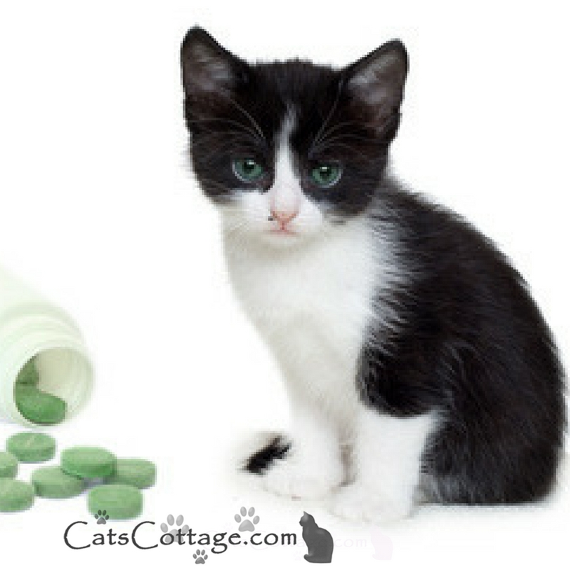 How to give your cat a pill (successfully)