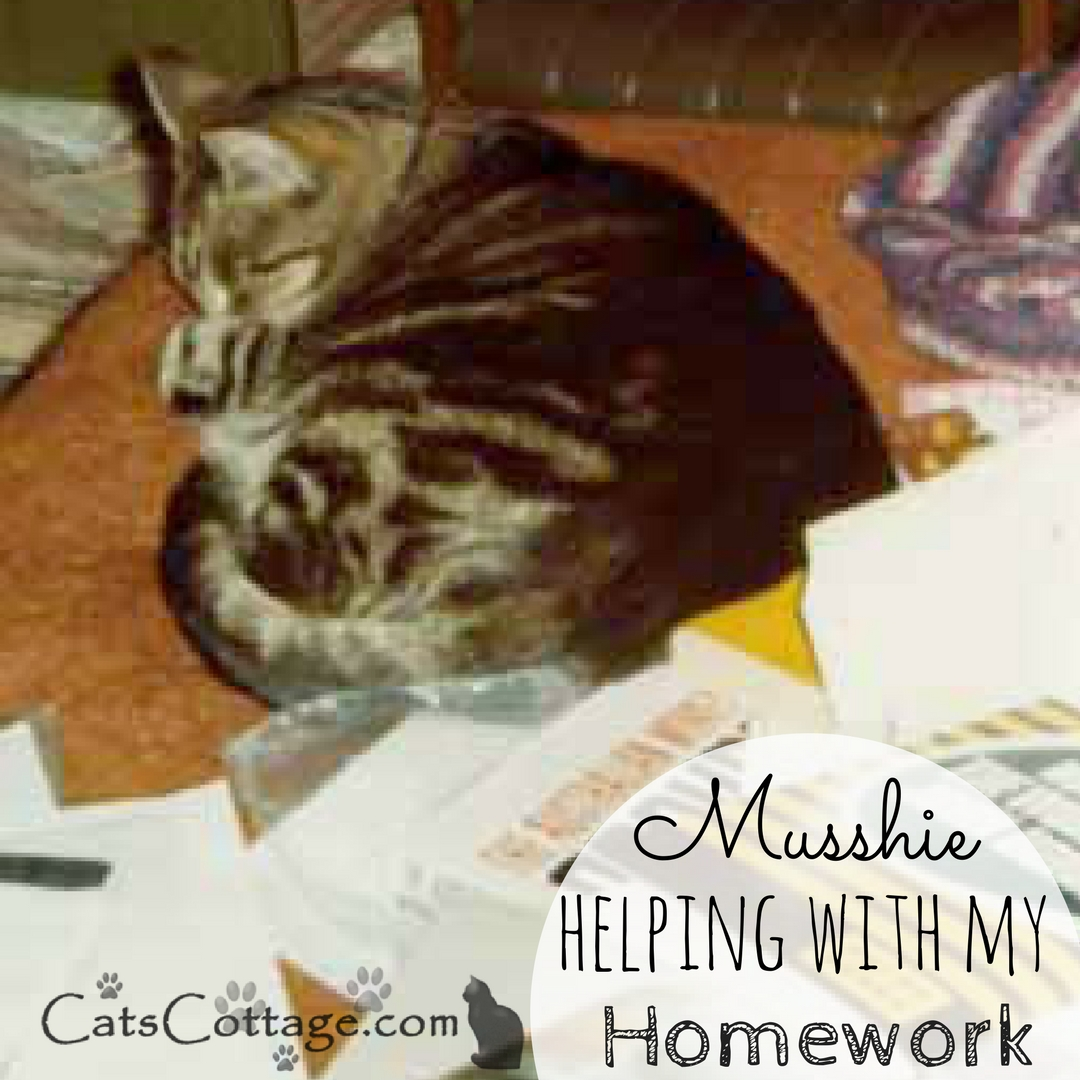Musshie Helping With Homework