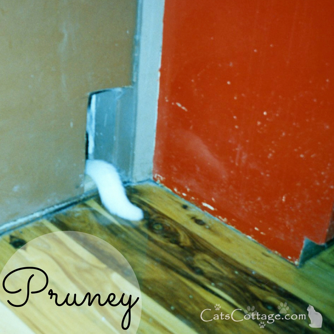 Pruney and cat door