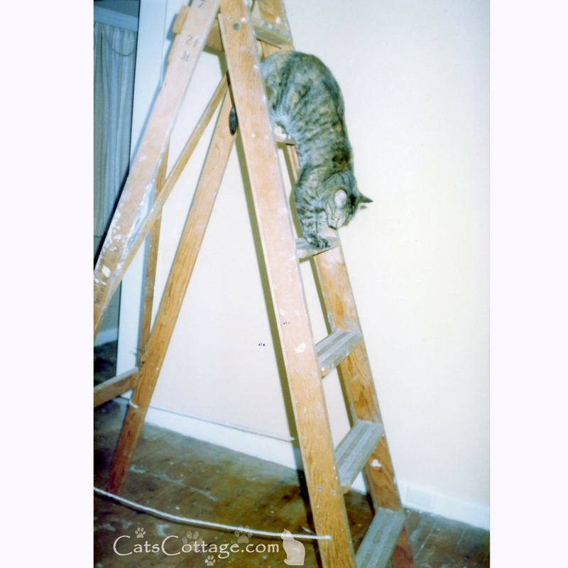 Keep your kitty safe while renovating