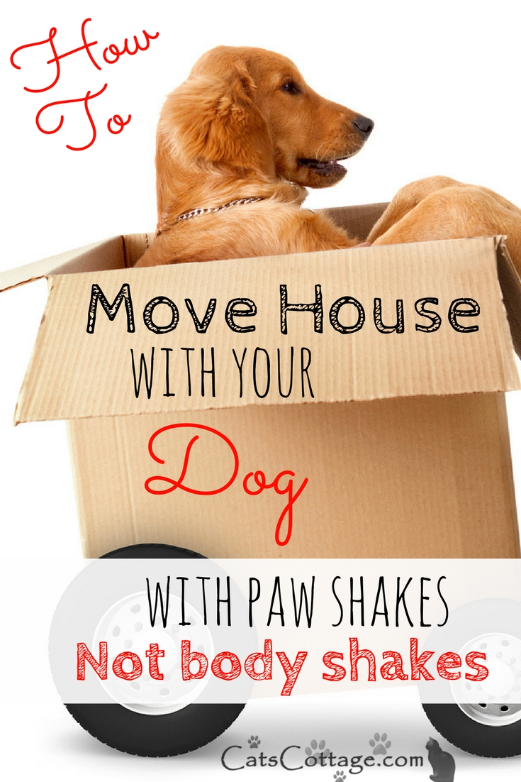 How to move house with your dog with paw shakes not body shakes