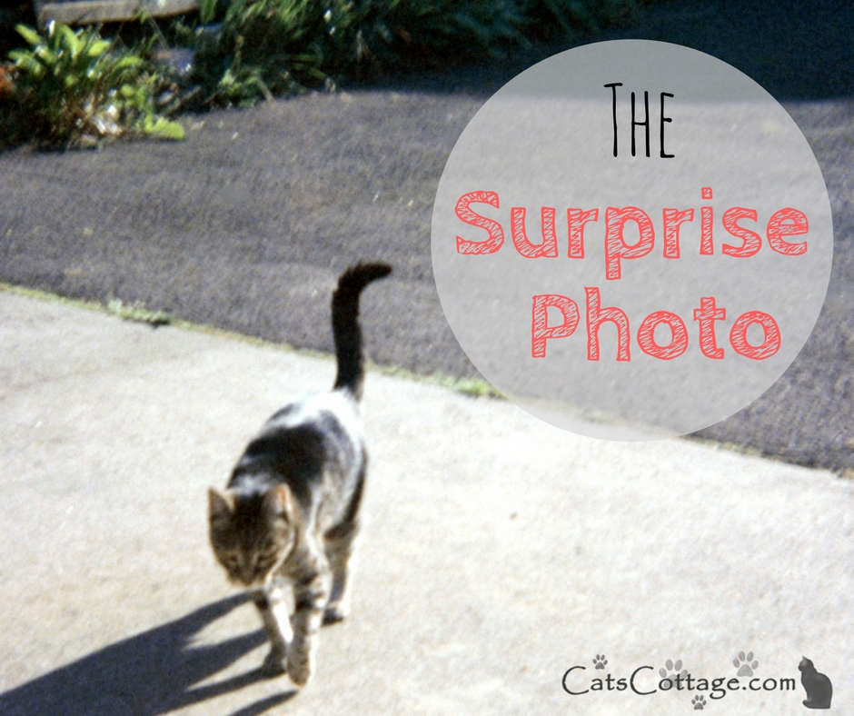The Surprise Photo