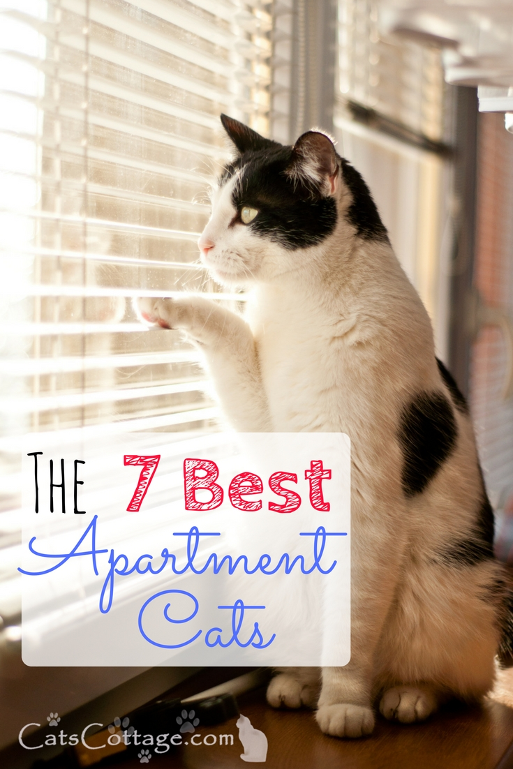 The 7 Best Apartment Cats